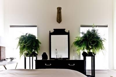 گیاهان معجزه گر در اتاق خواب