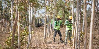 اپل و سرمایه گذاری بر روی درختان