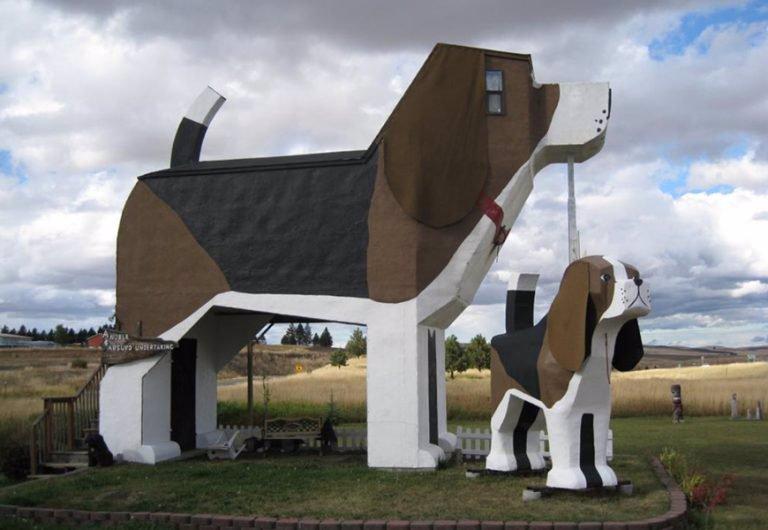مسافرخانه پارکِ داگ بارک (Dog Bark Park Inn)