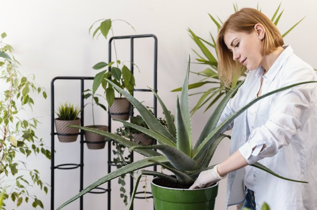 کسب درآمد از پرورش گل و گیاه